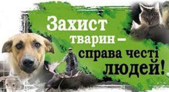У Переяславі-Хмельницькому розпочала свою роботу громадська організація «Захист тварин Переяславщини»