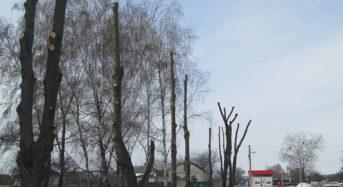 Працівники цеху «Благоустрій» КП «Переяслав-Хмельницьке виробниче управління комунального господарства» доглядають за деревами