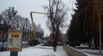 В місті виконуються роботи по коронуванню дерев