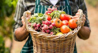Декларація з податку на прибуток у виробників сільськогосподарської продукції