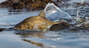 На Переяславщині патрульні зупинили автівку, де виявили близько 50 кілограм риби без документів