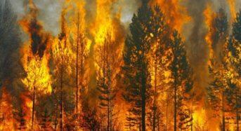 Увага! Підвищується ризик виникнення лісових пожеж !