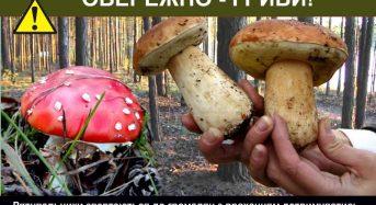Як не отруїтися грибами