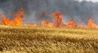 Заходи протипожежної безпеки допоможуть зберегти врожай