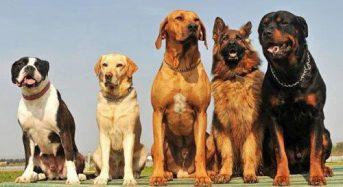 29 червня відбудеться виставка собак всіх порід рангу САС