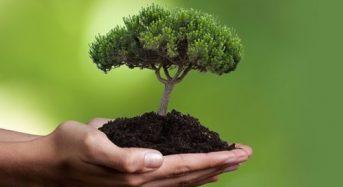 Запропонуйте власну назву скверам міста та долучіться до флешмобу з висадження дерев!