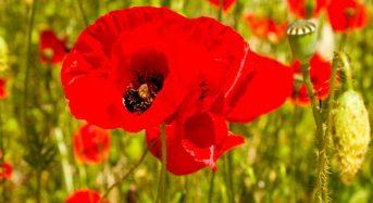 Символ пам'яті жертв війни…