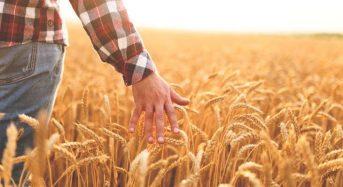 Фермери отримають фінансову підтримку від держави