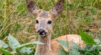 У Київській області триває підрахунок чисельності диких тварин