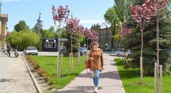 У Переяславі цвітуть сакури. Містяни залюбки фотографуються