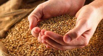 Переяславський відділ Головного управління Держпродспоживслужби у Київській області визначає посівні якості насіння