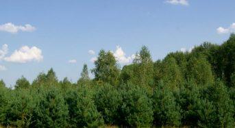 Відтворення лісів – одне з основних завдань лісівників Київщини